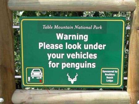 penguin? penguin!